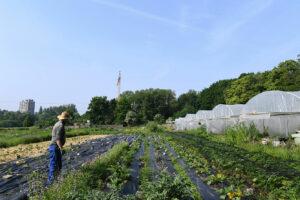 Devenir agriculteur·trice via l'Espace-test agricole d'Anderlecht